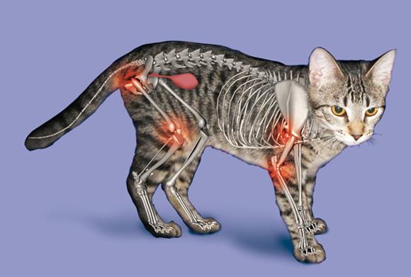 Pijnlijke gewrichten bij artritis