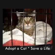 adopteer1