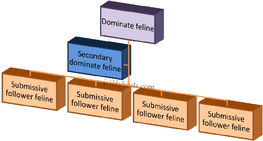 cat-colony-diagram