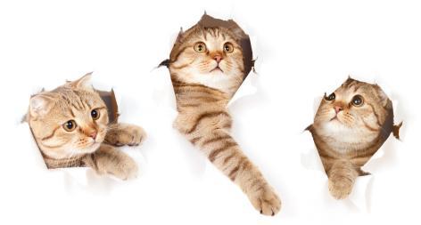 catbehaviour3