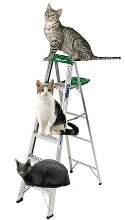 catladder