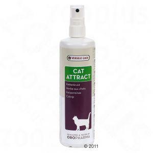 catnip_spray_08_2011_9