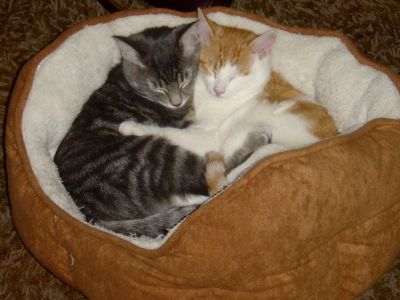 hugging-kittens