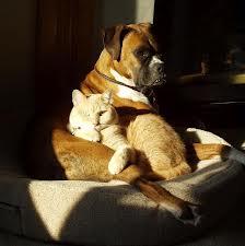 interspeciesfriendship1