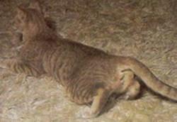 krolse kat