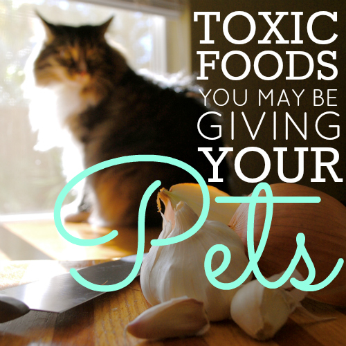 toxic-foods-you-may-be-giving-your-pets