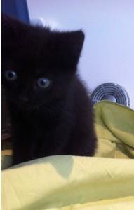 zwart1
