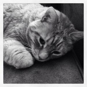 Sad_cat
