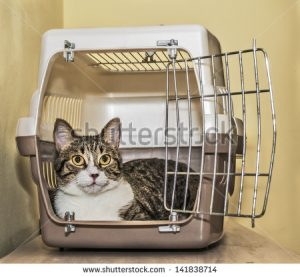 stock-photo-tabby-cat-inside-a-cat-carrier-box-141838714
